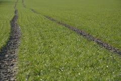 Zielony pole Obrazy Stock
