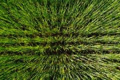 Zielony pole banatki trawy tła tekstura Obrazy Royalty Free