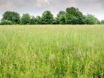 Zielony pole, drzewa i niebo, fotografia royalty free