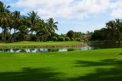 Zielony pole, funt z drzewkami palmowymi Zdjęcie Stock