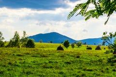Zielony pole i haystacks Fotografia Royalty Free