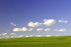 Zielony pole i niebieskie niebo obraz royalty free