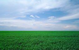Zielony pole i niebieskie niebo. zdjęcia royalty free