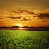 Zielony pole i niebieskie niebo obrazy royalty free
