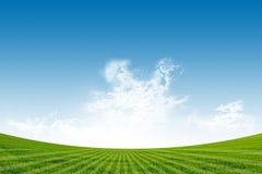 Zielony Pole i Niebieskie Niebo Obrazy Stock