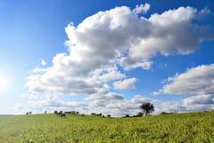Zielony pole i niebieskie niebo Fotografia Royalty Free