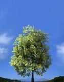 Zielony pole i osamotniony drzewo - krajobraz Obraz Royalty Free