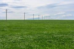 Zielony pole młoda banatka, słupy z elektrycznymi drutami w dystansowego i chmurnego niebo Fotografia Royalty Free