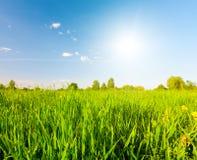 Zielony pole pod niebieskim niebem z słońcem obraz stock