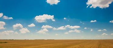 Zielony pole pod pięknym zmrokiem - niebieskie niebo Obrazy Royalty Free