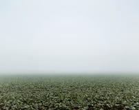 Zielony pole przy jesień dniem Zdjęcia Royalty Free