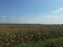 Zielony pole uprawne w gorącym letnim dniu obraz stock