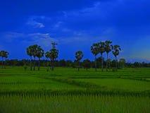 Zielony pole uprawne wieczór Zdjęcie Stock