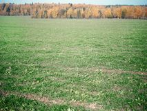 Zielony pole w jesieni zdjęcie royalty free