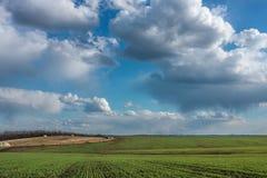 Zielony pole z świeżą wibrującą trawą i niebieskim niebem z dramatycznymi chmurami przy dniem Obrazy Royalty Free