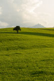 Zielony pole z drzewnym halnym szczytem w plecy Obrazy Royalty Free