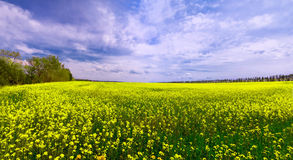 Zielony pole z koloru żółtego niebieskim niebem i kwiatami Obraz Royalty Free