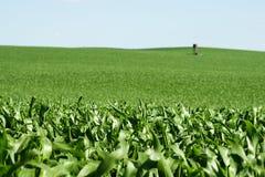 Zielony pole z kukurudzą i wierza Fotografia Royalty Free