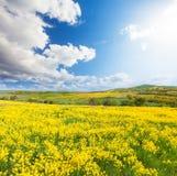 Zielony pole z kwiatami pod błękitnym chmurnym niebem zdjęcia royalty free