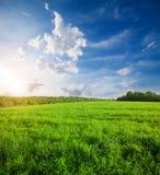 Zielony pole z kwiatami pod błękitnym chmurnym niebem obraz royalty free