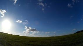 Zielony pole z niebieskiego nieba i chodzenia chmurami Ładna lato pogoda Czasu upływ zbiory