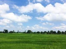 Zielony pole z niebieskim niebem zdjęcie stock