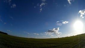 Zielony pole z niebieskim niebem i unosić się chmurami zbiory