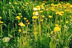 Zielony pole z ? zdjęcia stock