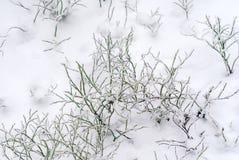 Zielony porośle pod pierwszy śniegiem fotografia royalty free