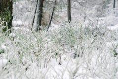 Zielony porośle pod pierwszy śniegiem zdjęcie stock