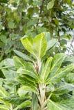 Zielony porośle w tropikalnym lesie deszczowym obrazy stock