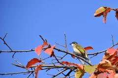 Zielony ptak Zdjęcia Stock