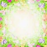Zielony różowy rozmyty kwiecisty tło, kwiat rama Zdjęcie Royalty Free