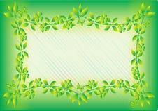 zielony ramowy liścia ilustracja wektor