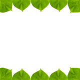 zielony ramowy liścia zdjęcia stock