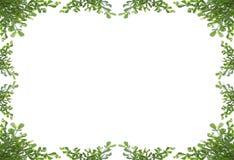 zielony ramowy liścia Zdjęcie Stock