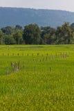 Zielony Rice pole z górami Zdjęcia Stock