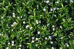 zielony środowisk naturalnych Fotografia Stock