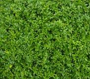 zielony środowisk naturalnych Zdjęcie Royalty Free