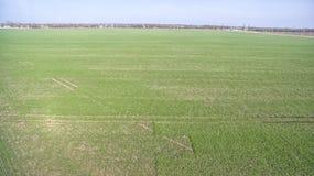 Zielony rolnictwa pole Zdjęcia Royalty Free