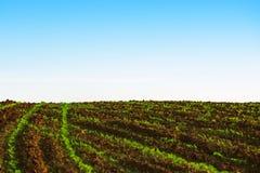 Zielony rolniczy lochy pole, błękit i Zdjęcia Royalty Free