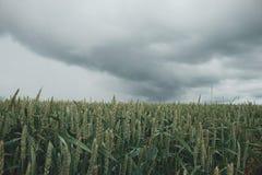 Zielony rolniczy pole z dramatycznym niebem zdjęcie stock