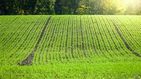Zielony rolnika pole, przygotowany dla następnego sezonu zdjęcie royalty free