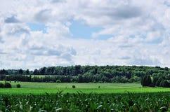 Zielony rolny pole i zalesianie z niebem i chmurami Zdjęcie Stock