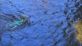 Zielony rower porzucający w rzece w lecie zdjęcie wideo