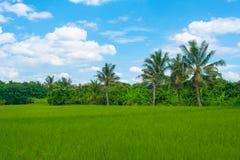 Zielony ryżu taras, ryżu pole zielona trawa, góra i niebieskie niebo, zdjęcia royalty free