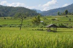 Zielony ryżu pola taras Fotografia Royalty Free