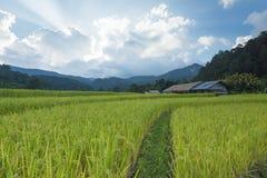 Zielony ryżu pola taras Zdjęcia Stock