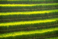 Zielony ryżu pole na tarasie Wietnam krajobraz Obrazy Stock