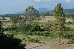 Zielony ryżu pole w Pua Fotografia Stock